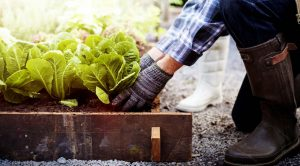 Gardening: Start gardening in the winter for spring